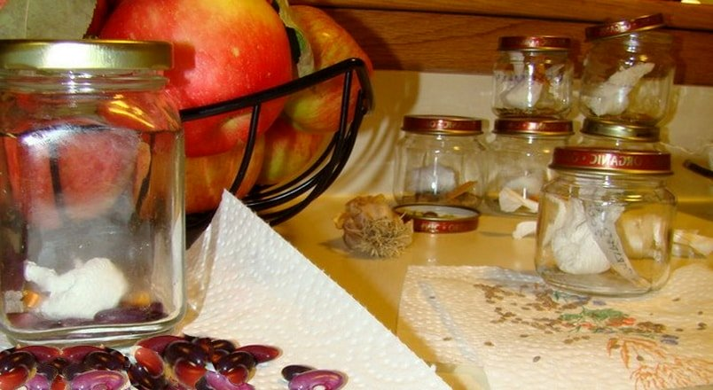 Длительное хранение семян, свойства и особенности