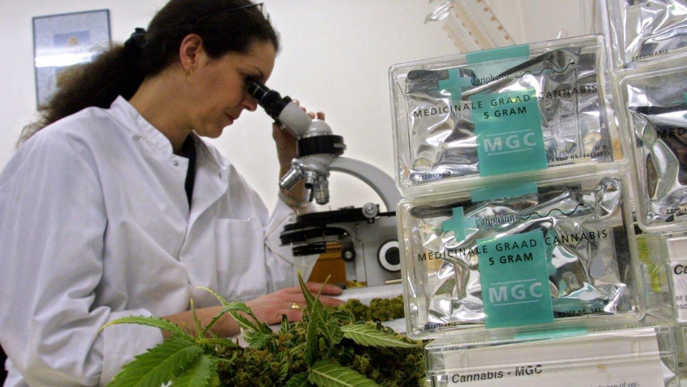 Чем можно вывести марихуану сколько ростет конопля