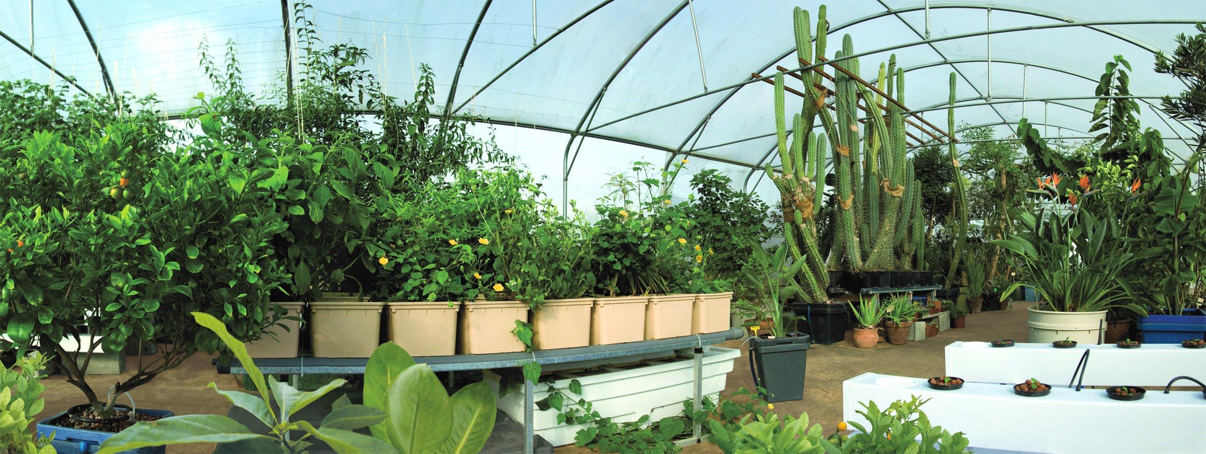 Гидропоника в домашних условиях зелень своими руками фото