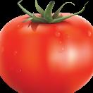 Pomidorka