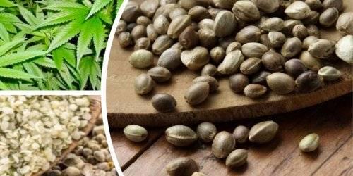 Здоровье семена конопли конопля как ухаживать домашний
