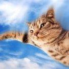 кот-травокур