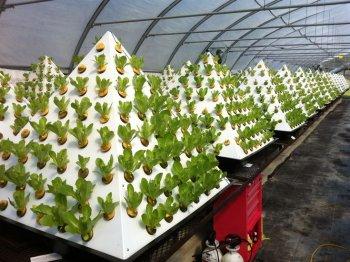 14fd41f5c914297e8f791c9876375fee--diy-gardening-hydroponics.jpg
